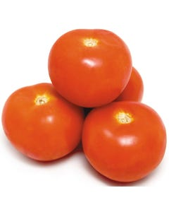 Tomatoes Large PER KG